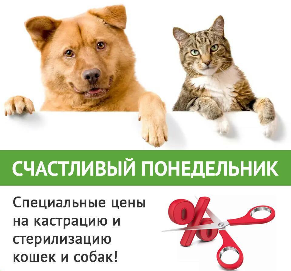 Кастрация (стерилизация) животных